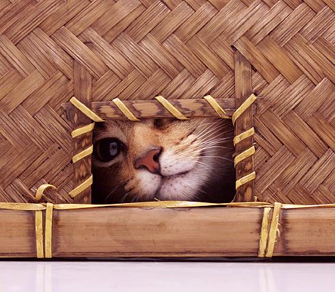 [猫的]ホラッ、カワイイ?_e0090124_10433574.jpg