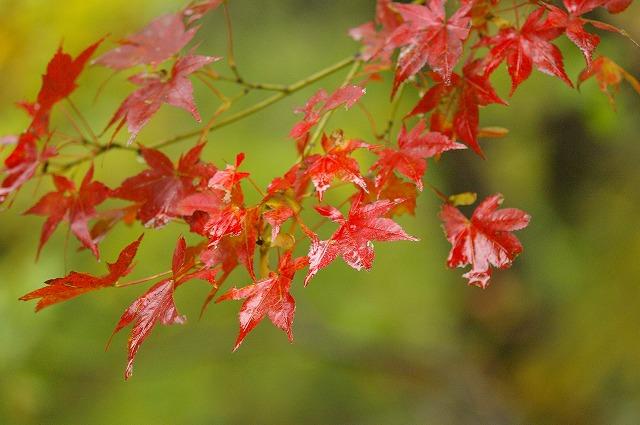 秋の釈迦新道を行く_d0043136_18512635.jpg