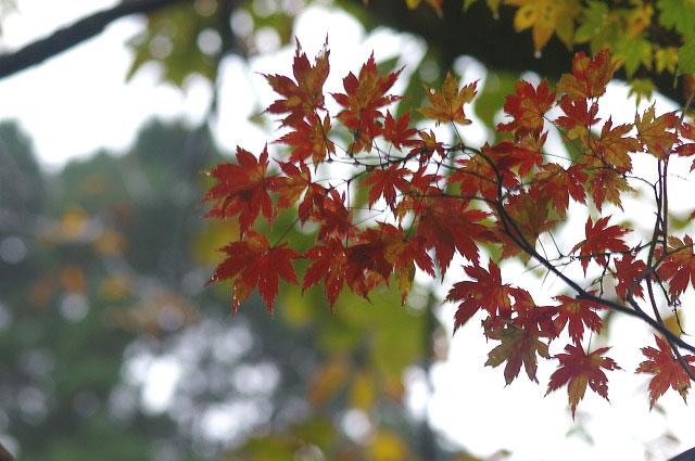 秋の釈迦新道を行く_d0043136_22324069.jpg