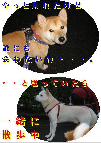 e0085147_365645.jpg