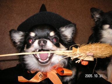 Happy Halloween_d0006467_18262696.jpg