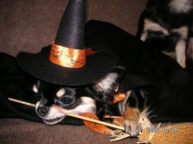 Happy Halloween_d0006467_18265047.jpg