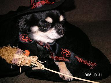 Happy Halloween_d0006467_18273376.jpg