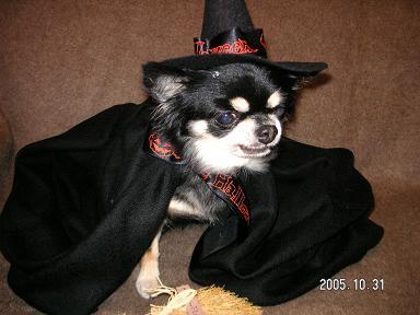 Happy Halloween_d0006467_1827512.jpg