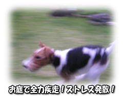 a0037682_22465375.jpg
