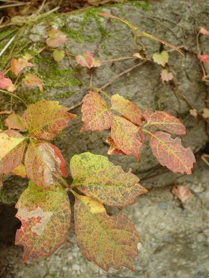 autumn breeze_c0069389_18132483.jpg