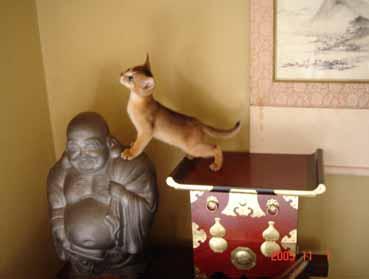 アビシニアン子猫6週目_e0033609_1511169.jpg