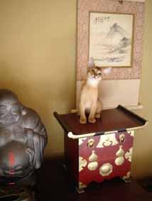 アビシニアン子猫8週目_e0033609_1542274.jpg