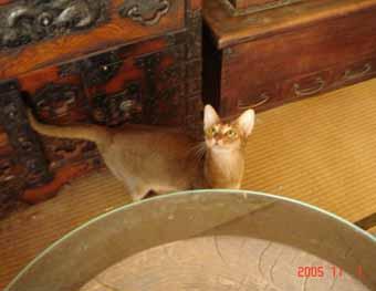 アビシニアン子猫3週目_e0033609_1552429.jpg
