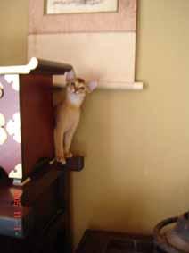 アビシニアン子猫8週目_e0033609_155474.jpg
