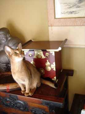 アビシニアン子猫3週目_e0033609_15565051.jpg