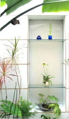 今年もパフィオが開花!温室の特等席へ昇格。_e0010418_17361730.jpg