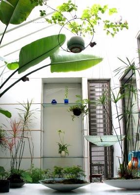 今年もパフィオが開花!温室の特等席へ昇格。_e0010418_17363342.jpg