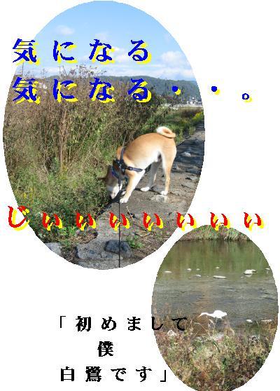 e0085147_5562351.jpg