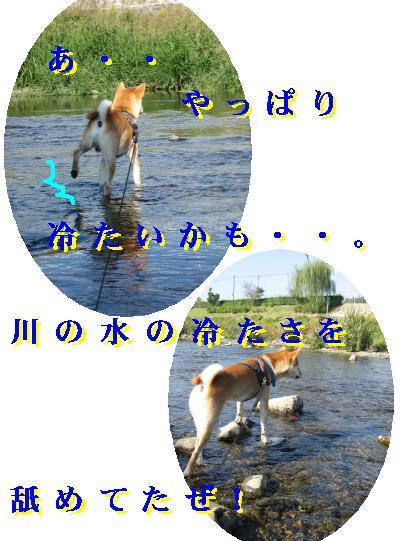 e0085147_604896.jpg