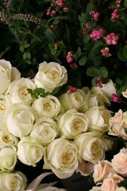 今日のお花たち_d0000304_1114092.jpg