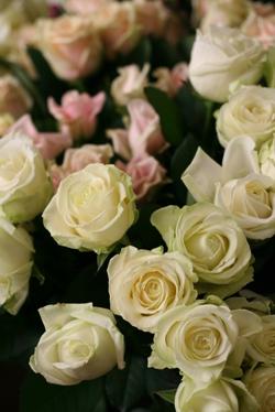 今日のお花たち_d0000304_1116078.jpg