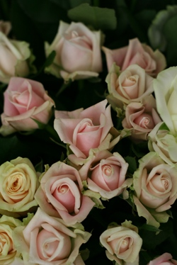 今日のお花たち_d0000304_1116583.jpg