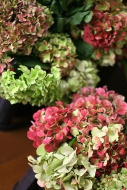 今日のお花たち_d0000304_11281026.jpg