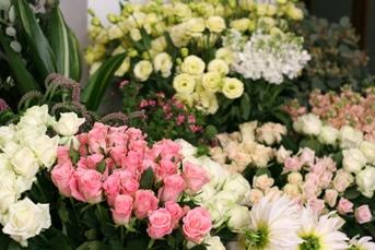 今日のお花たち_d0000304_1194522.jpg