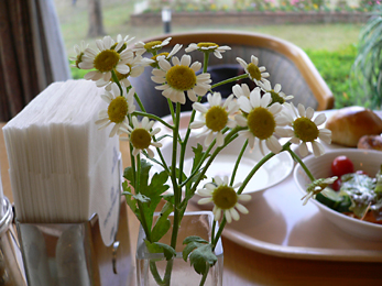 朝のテーブル_c0069048_6224343.jpg
