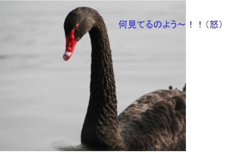 a0004023_2225164.jpg