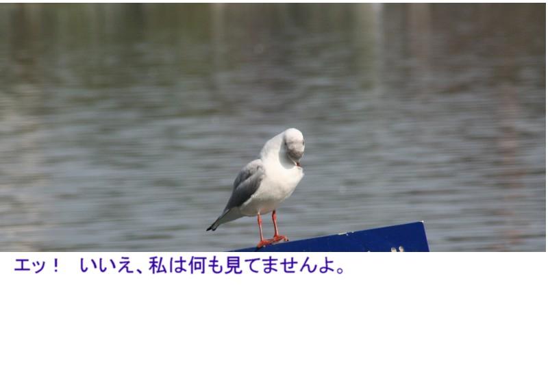 a0004023_2251661.jpg