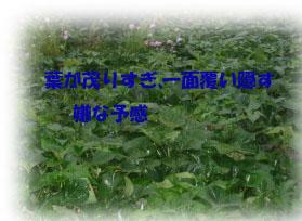 d0029826_2013266.jpg