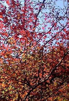 紅葉を追って山へ・・・_c0036138_19551771.jpg