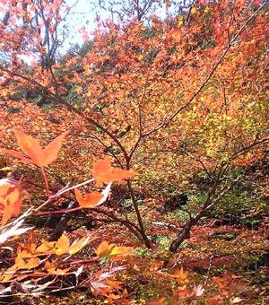 紅葉を追って山へ・・・_c0036138_20261253.jpg