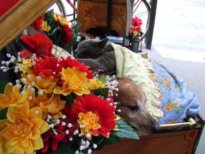 お花に埋もれて_e0044855_205421.jpg