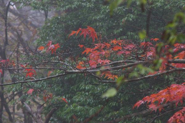 雨の中!_e0065205_21114278.jpg