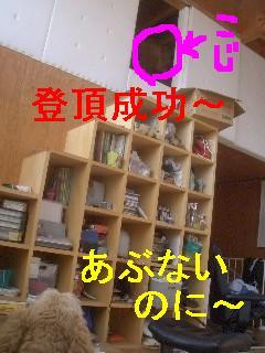 c0049339_12245232.jpg