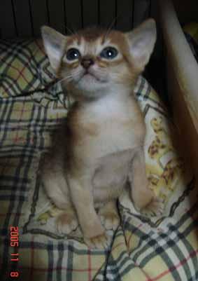 アビシニアン子猫4週目_e0033609_21451543.jpg