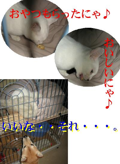 e0085147_20442861.jpg