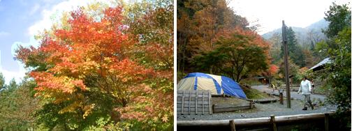 東京で自然を満喫_a0024571_11164586.jpg