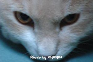 b0035974_23161428.jpg