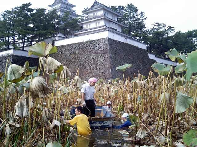 レンコン掘り(報告3) 2005/11/8_c0052876_1137795.jpg