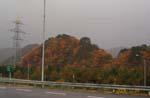 ぶどうの苗木を相談に山形へ_d0026905_21182658.jpg