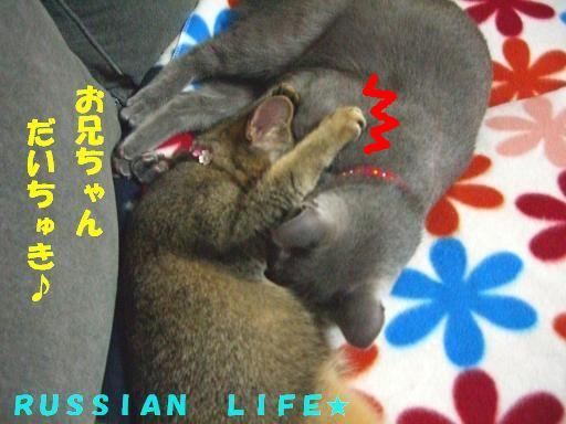 d0045408_950596.jpg