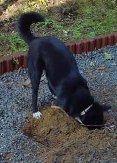 【5189】 犬もすなる自己主張_e0083820_2221328.jpg