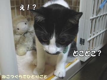 b0041182_1573349.jpg