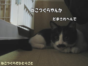 b0041182_158555.jpg