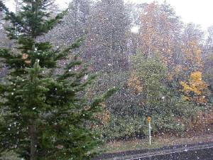 初雪_a0008185_102451.jpg