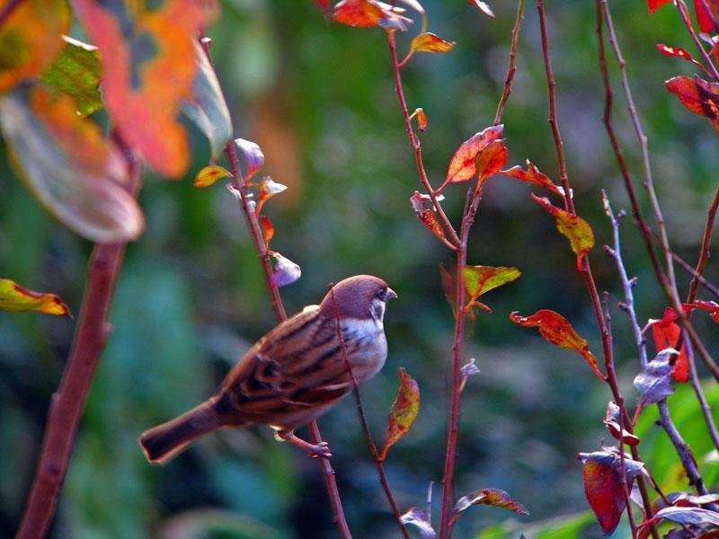 秋の景色_b0024798_6215249.jpg