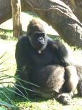 大人の動物園。_d0046025_14274264.jpg