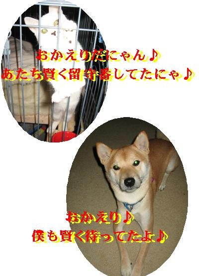 e0085147_2272665.jpg