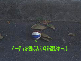 d0043478_0302724.jpg