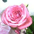 e0083486_1313382.jpg
