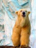 大人の動物園。_d0046025_123669.jpg